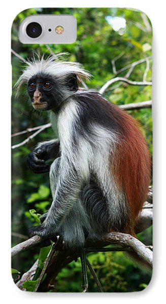 Red Colobus Monkey IPhone Case