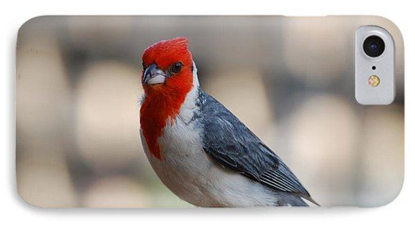 Red Crested Cardinal IPhone Case by DejaVu Designs