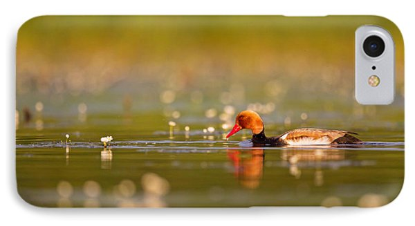 Red-crested Pochard IPhone Case