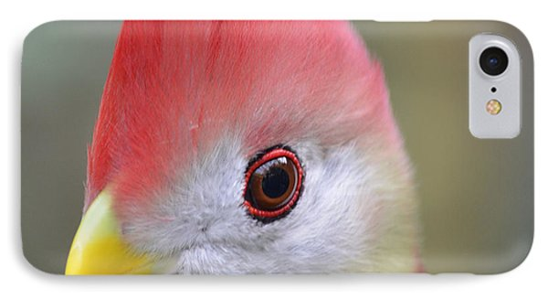 Red Crested Turaco IPhone Case by Richard Bryce and Family