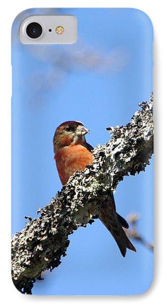 Red Crossbill Finch IPhone 7 Case by Marilyn Wilson