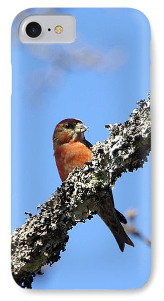 Red Crossbill Finch IPhone Case by Marilyn Wilson