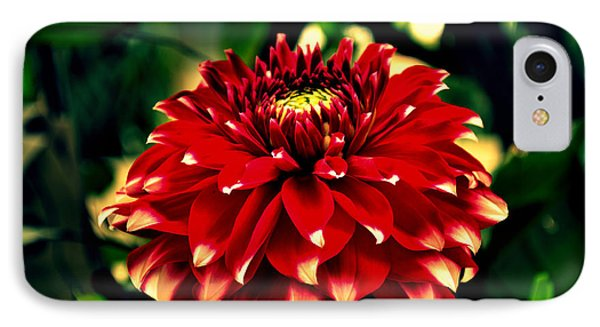 Red Dahlia IPhone Case by Salman Ravish