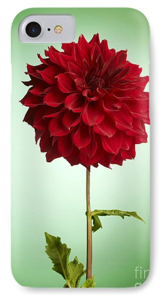 Red Dahlia IPhone Case by Tony Cordoza