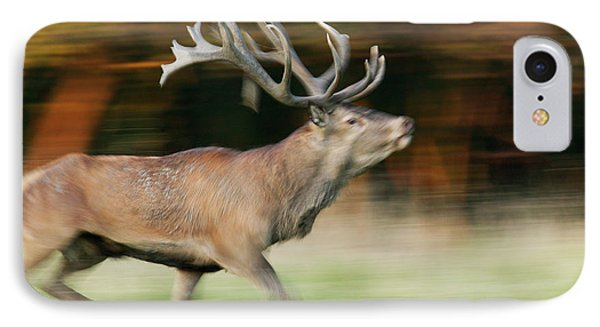 Red Deer Cervus Elaphus Stag Running Phone Case by Cyril Ruoso