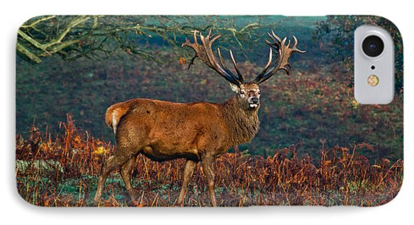 Red Deer Stag In Woodland IPhone Case by Scott Carruthers