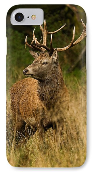 Red Deer Stag IPhone Case