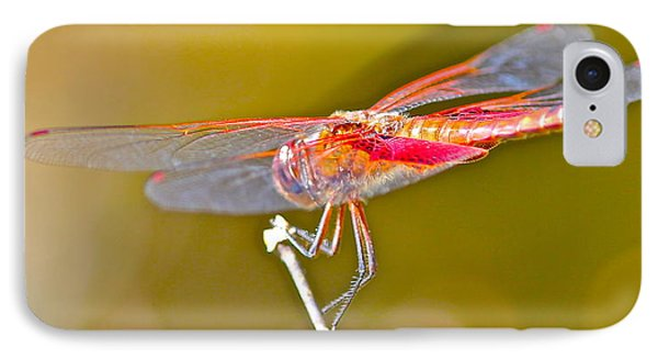 IPhone Case featuring the photograph Red Dragonfly by Cyril Maza
