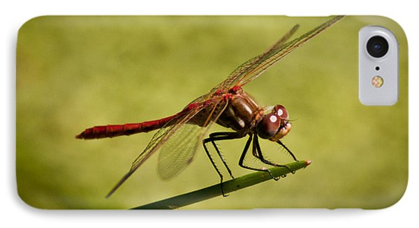 IPhone Case featuring the photograph Red Dragonfly by Janis Knight