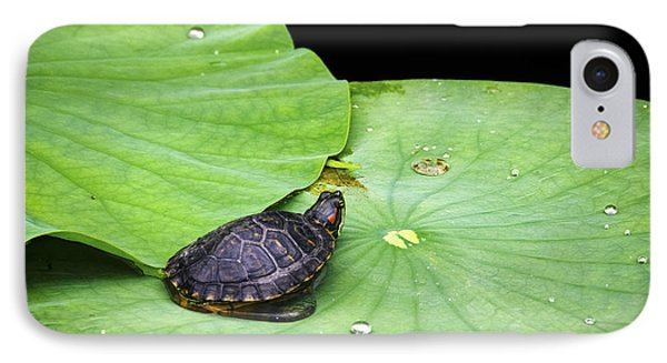 Red-eared Slider IPhone Case by Greg Reed