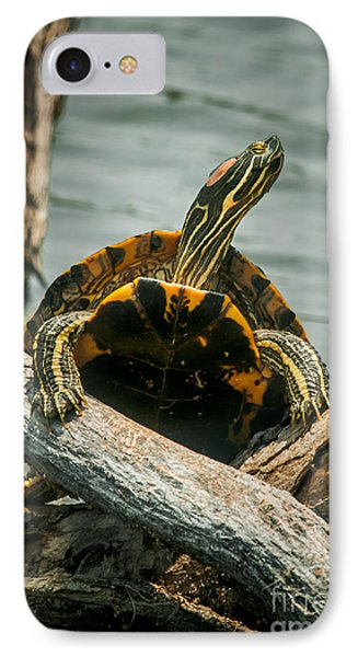 Red Eared Slider Turtle IPhone Case by Robert Frederick