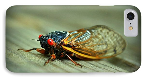 IPhone Case featuring the photograph Red Eye Cicada by Kelly Nowak