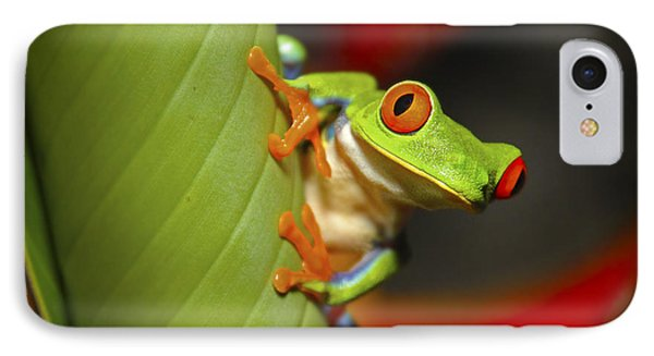 Red Eyed Leaf Frog Phone Case by Bob Hislop