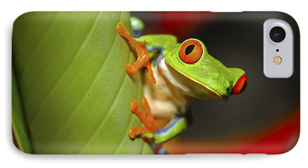 Red Eyed Leaf Frog IPhone Case by Bob Hislop
