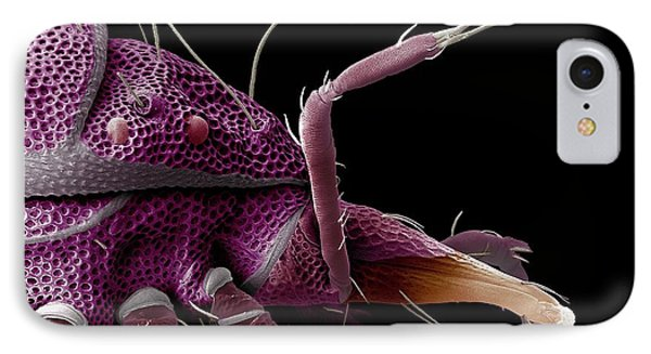 Red-eyed Predatory Mite IPhone Case by Ecmu Bauchan/us Department Of Agriculture