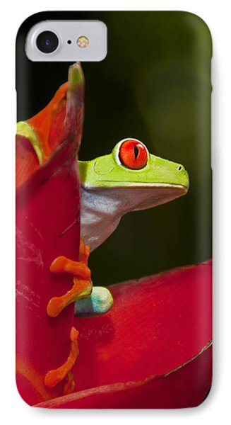 IPhone Case featuring the photograph Red Eyed Tree Frog 3 by Dennis Cox WorldViews