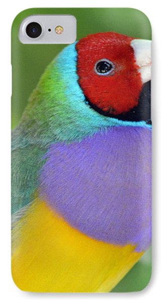 Red Faced Gouldian Finch Phone Case by Richard Bryce and Family