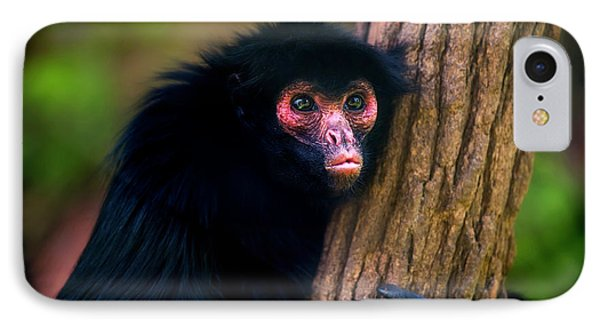Red-faced Spider Monkey Ateles Paniscus IPhone Case by Leonardo Mer�on