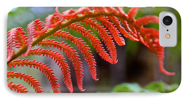 Autumn Fern In Hawaii IPhone Case by Venetia Featherstone-Witty