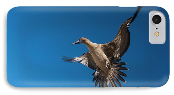 Red-footed Booby (sula Sula Websteri IPhone 7 Case by Pete Oxford