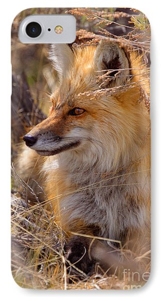 IPhone Case featuring the photograph Red Fox At Rest by Aaron Whittemore