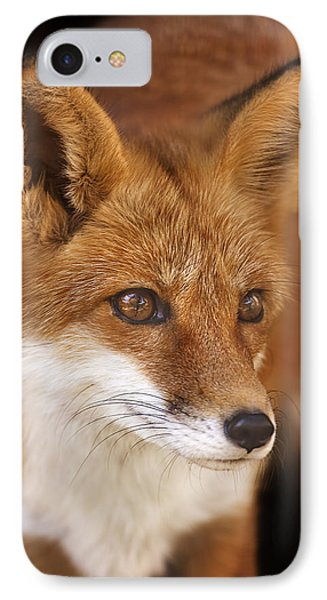 Red Fox  IPhone Case by Brian Cross