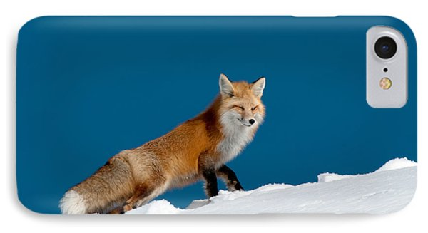 Red Fox Phone Case by Gary Beeler