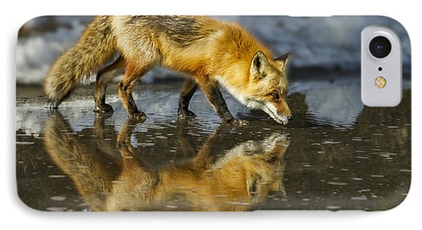 Red Fox Has A Drink IPhone Case