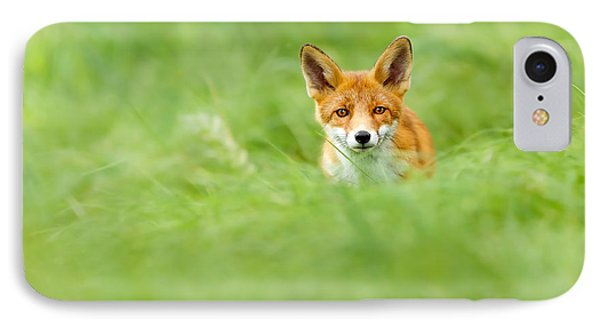 Red Fox In A Sea Of Green IPhone Case