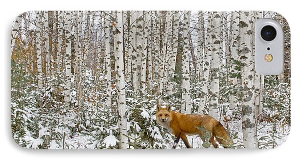Red Fox In Birches Phone Case by Jack Zievis
