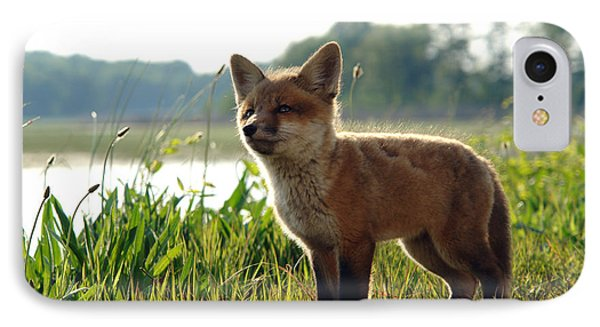 Red Fox Kit Phone Case by Olivier Le Queinec