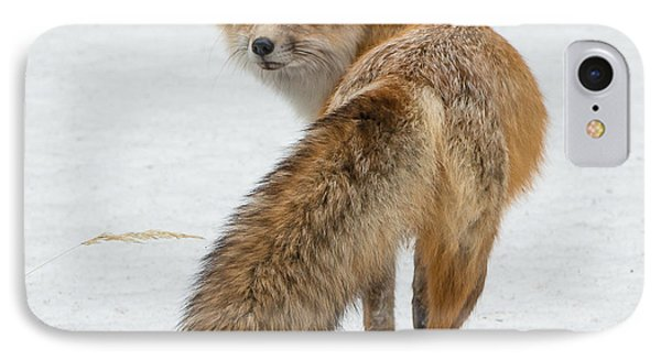 IPhone Case featuring the photograph Red Fox Of Silver Gate by Yeates Photography
