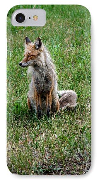 Red Fox Portrait Phone Case by Robert Bales
