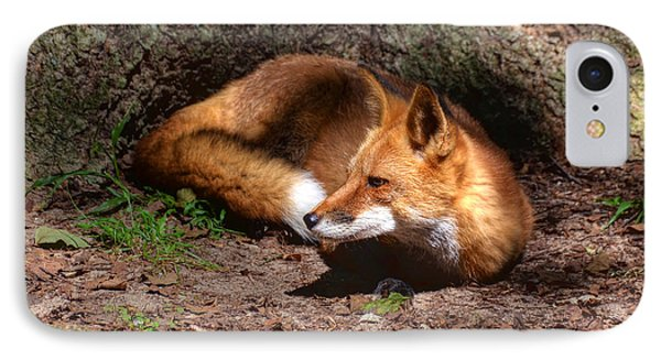 IPhone Case featuring the photograph Red Fox Resting by Kathy Baccari