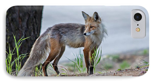 Red Fox IPhone Case by Robert Bales