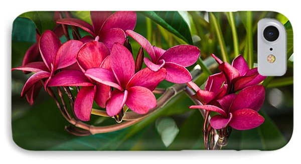 Red Frangipani Flowers IPhone Case