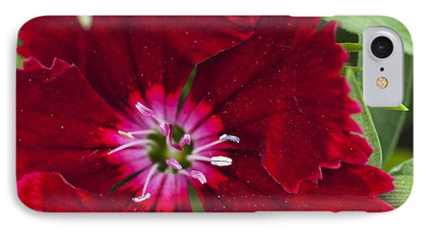 Red Geranium 1 Phone Case by Steve Purnell