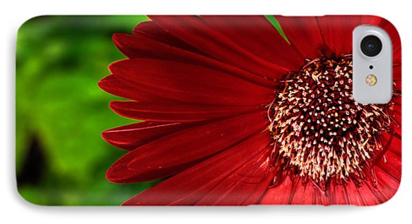 Red Gerber Daisy IPhone Case