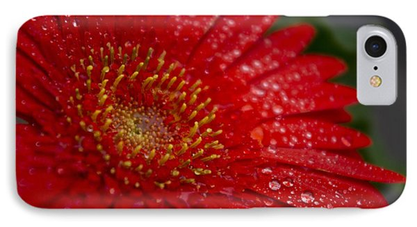 Red Gerber In The Rain IPhone Case by Shelly Gunderson