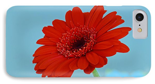 Red Gerbera Daisy IPhone Case by Scott Carruthers