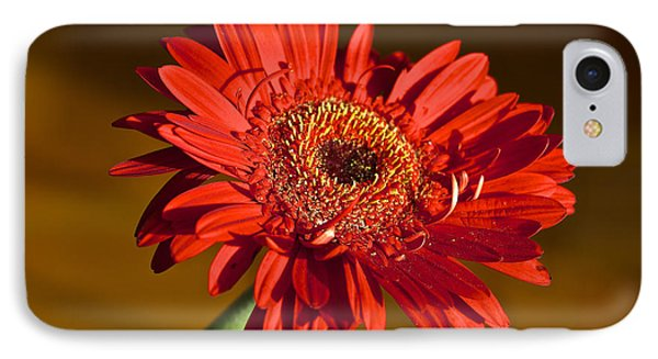 Red Gerbera IPhone Case by Venetia Featherstone-Witty