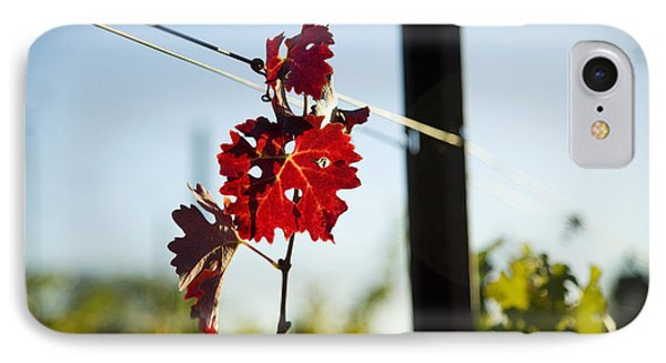 Red Grape Leaves Phone Case by Charmian Vistaunet