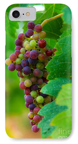 Red Grapes Phone Case by Hannes Cmarits