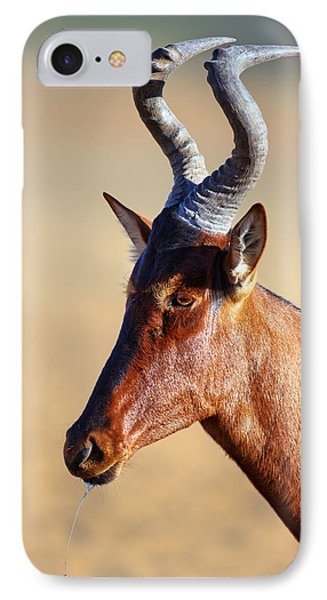 Red Hartebeest Portrait IPhone Case by Johan Swanepoel