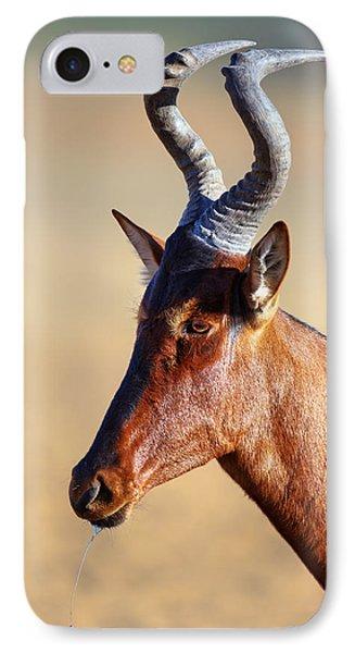 Red Hartebeest Portrait IPhone Case