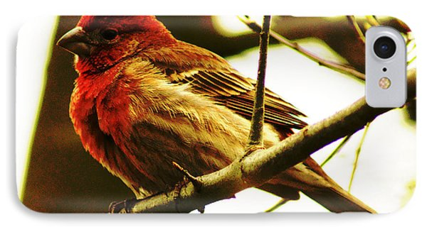 Red Headed House Finch IPhone Case by B Wayne Mullins