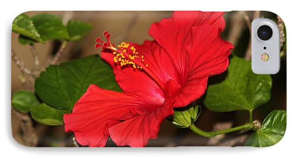 Red Hibiscus Flower IPhone Case by Cynthia Guinn