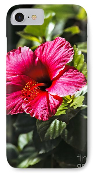Red Hibiscus Phone Case by Robert Bales