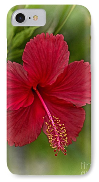 Red Hibiscus Phone Case by Wendy Townrow
