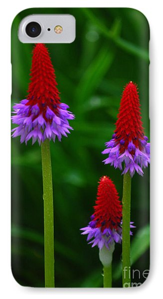 Red Hot Pokers IPhone Case by Cynthia Lagoudakis